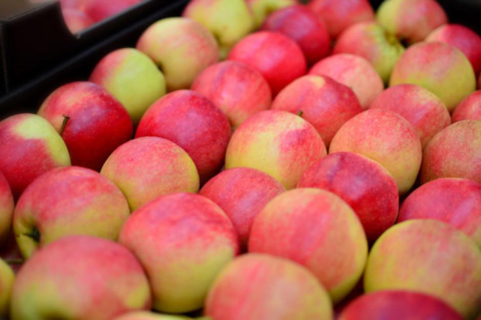 Bronisze: utrzymują się wysokie ceny jabłek