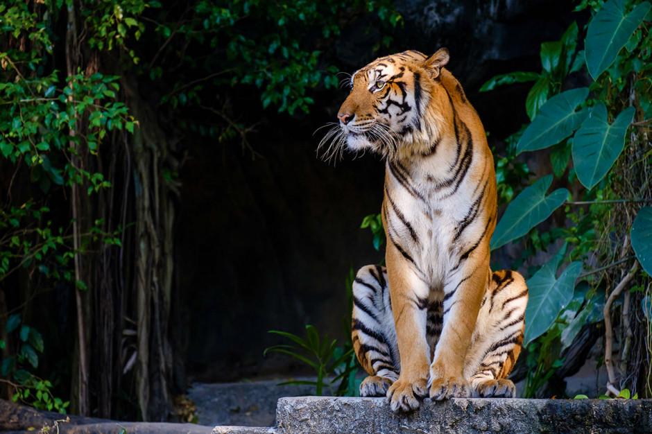 Indonezja: Azjatyckiemu tygrysowi smakuje europejska żywność