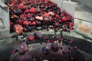 Zdjęcie numer 1 - galeria: Maszyny Ishida Europe usprawniają procesy produkcyjne w polskim przetwórstwie warzyw i owoców