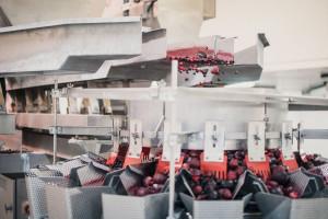 Zdjęcie numer 3 - galeria: Maszyny Ishida Europe usprawniają procesy produkcyjne w polskim przetwórstwie warzyw i owoców