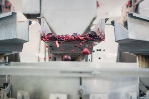 Zdjęcie numer 2 - galeria: Maszyny Ishida Europe usprawniają procesy produkcyjne w polskim przetwórstwie warzyw i owoców