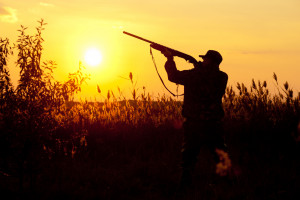 Aktywiści chcą wprowadzenia zakazu polowania na niektóre ptaki