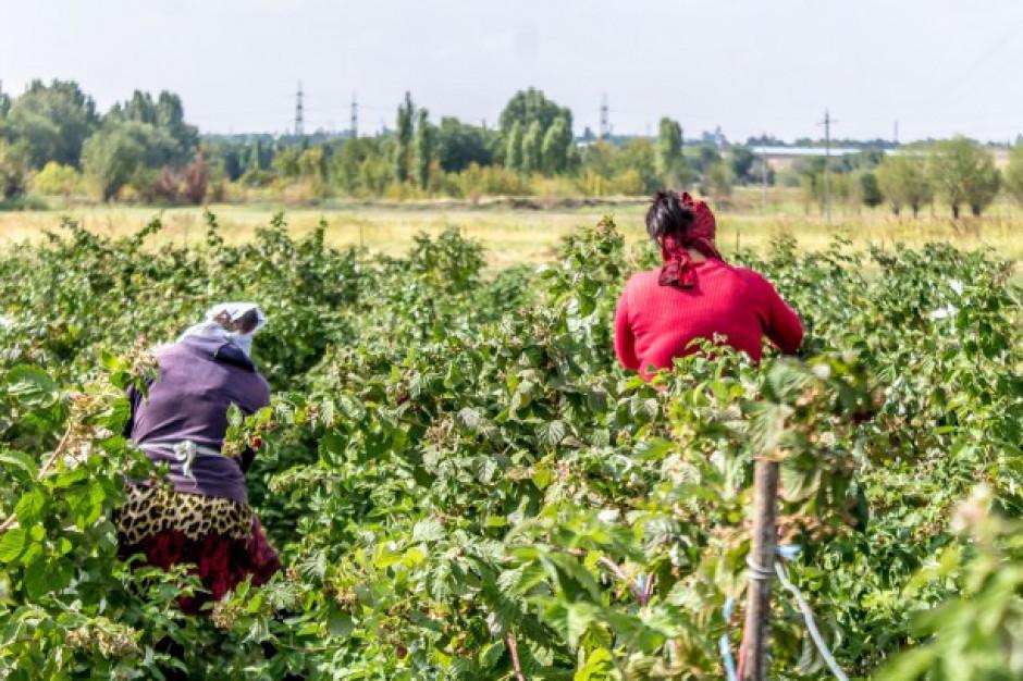 Rośnie problem nielegalnego zatrudnienia na wsi