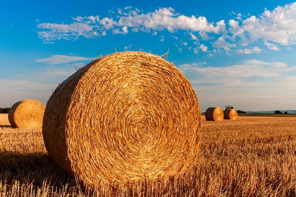 Jaki budżet na rolnictwo w 2020 roku?