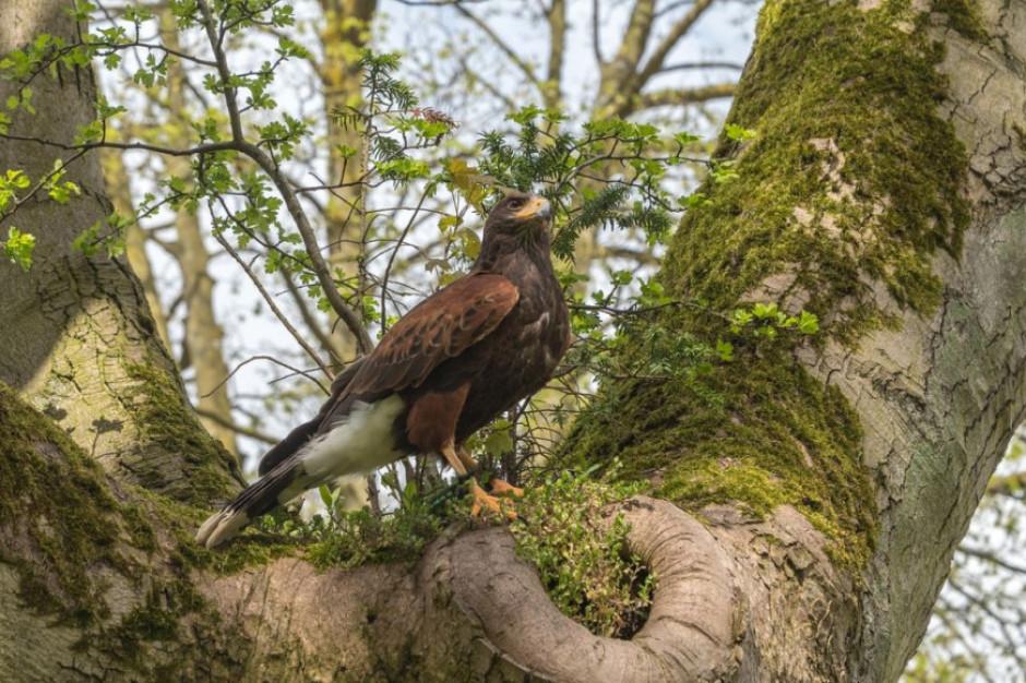 GLW potwierdza wystąpienie grypy u dzikich ptaków