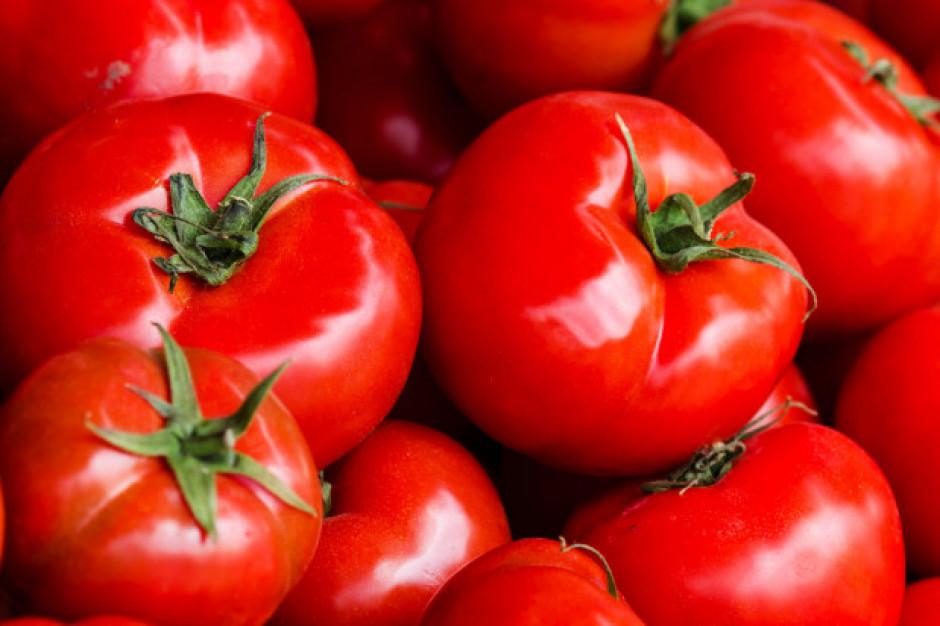 Europejscy konsumenci cenią mniejsze odmiany pomidorów
