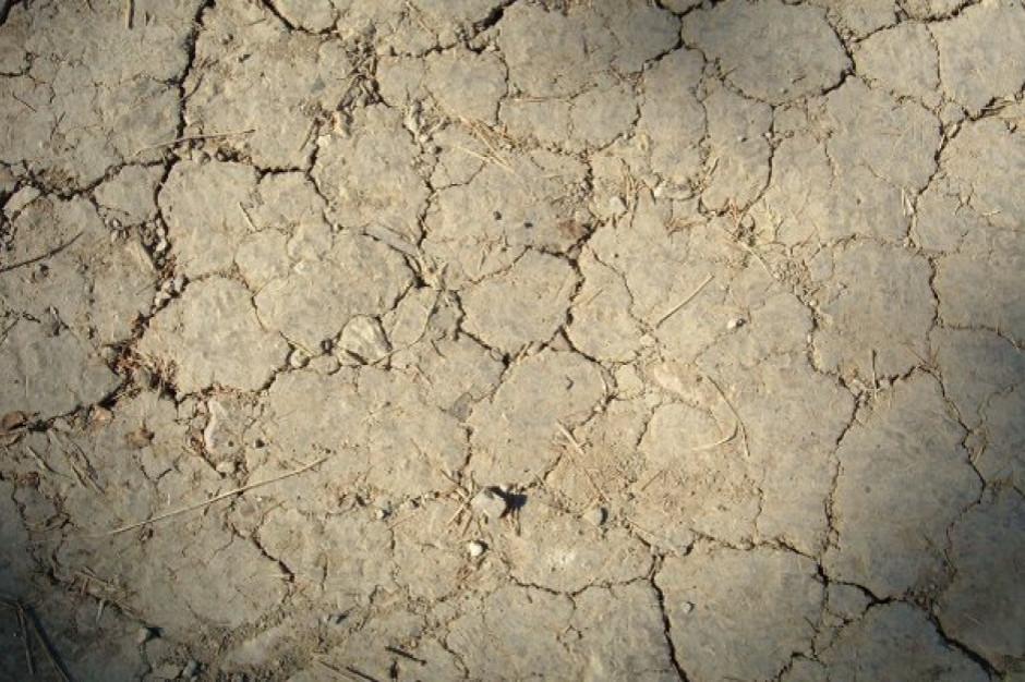Intensywna susza w części Polski. Bezśnieżna i ciepła zima uniemożliwia odbudowę wilgoci w glebie