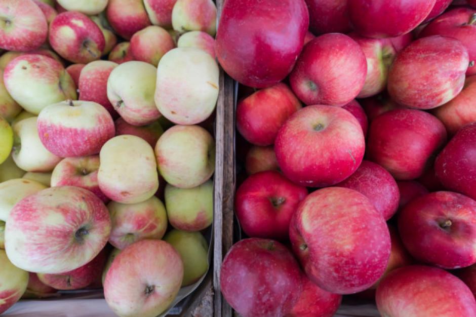 Eksporterzy jabłek obawiają się skrócenia sezonu sprzedaży
