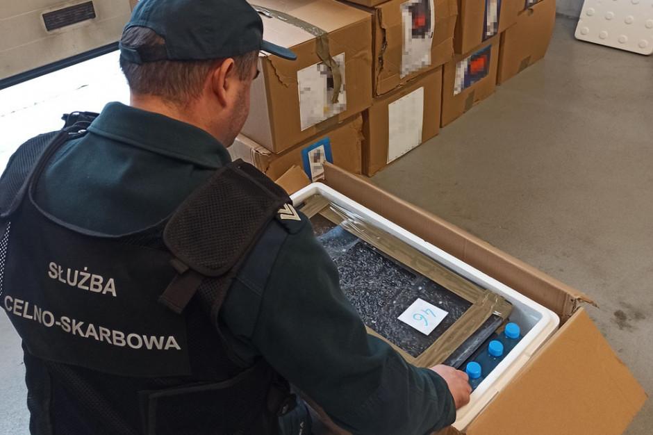 Podkarpackie: Rekordowa próba przemytu węgorza europejskiego