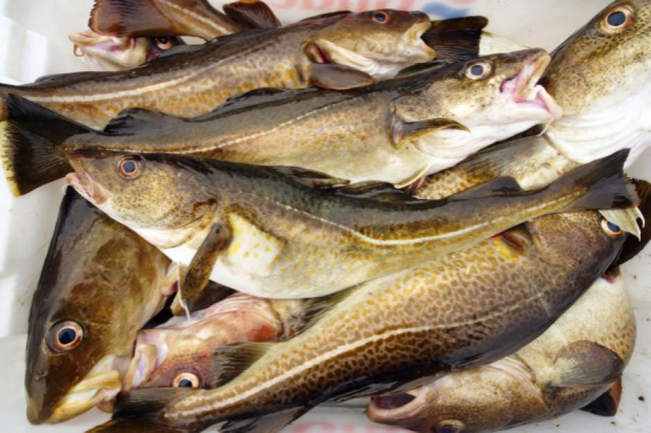 Przedsiębiorca wyrzucił do lasu 600 kg ryb
