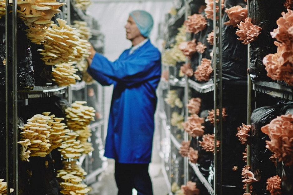Tesco: Nietypowe odmiany grzybów hitem w Wielkiej Brytanii