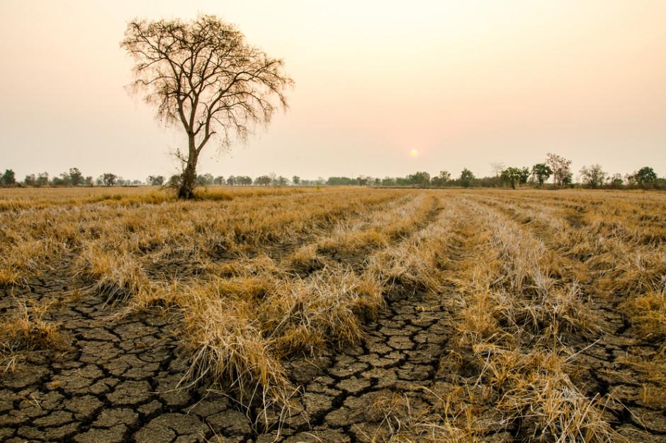 Susza zagraża polskiemu rolnictwu i całej gospodarce