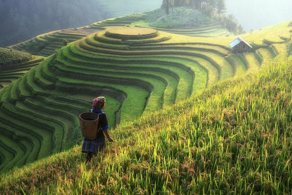 Rekordowa produkcja roślinna w Chinach