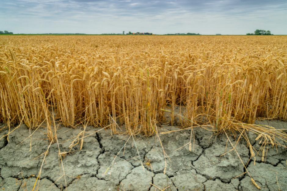 Ekspert: suszę rolniczą notujemy praktycznie co roku od 39 lat