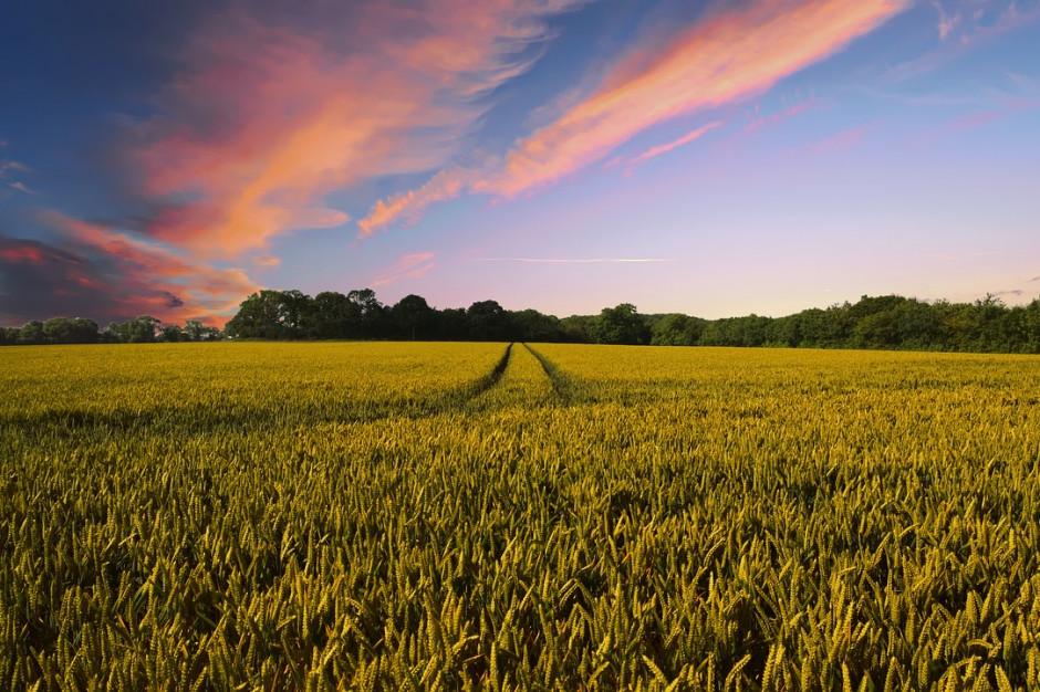 Rosyjskie ministerstwo rolnictwa spodziewa się wzrostu produkcji zbóż