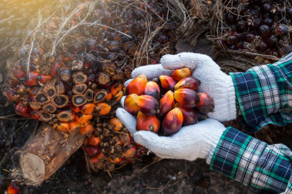 Olej palmowy: Certyfikowane uprawy poprawią jego wizerunek? (wideo)