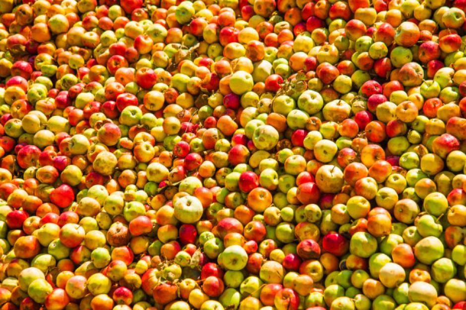 Ardanowski o skupie jabłek: ja za tę sprawę odpowiadam