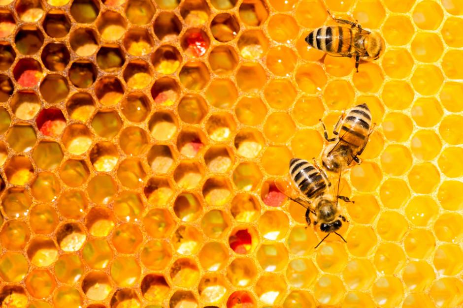 Miejskie pszczoły z Katowic zbierają miód z 50 różnych roślin