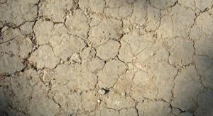 Wody Polskie: Mimo ostatnich opadów wciąż zagraża nam susza