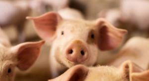 Ardanowski: od października brak przypadków ASF w polskich gospodarstwach