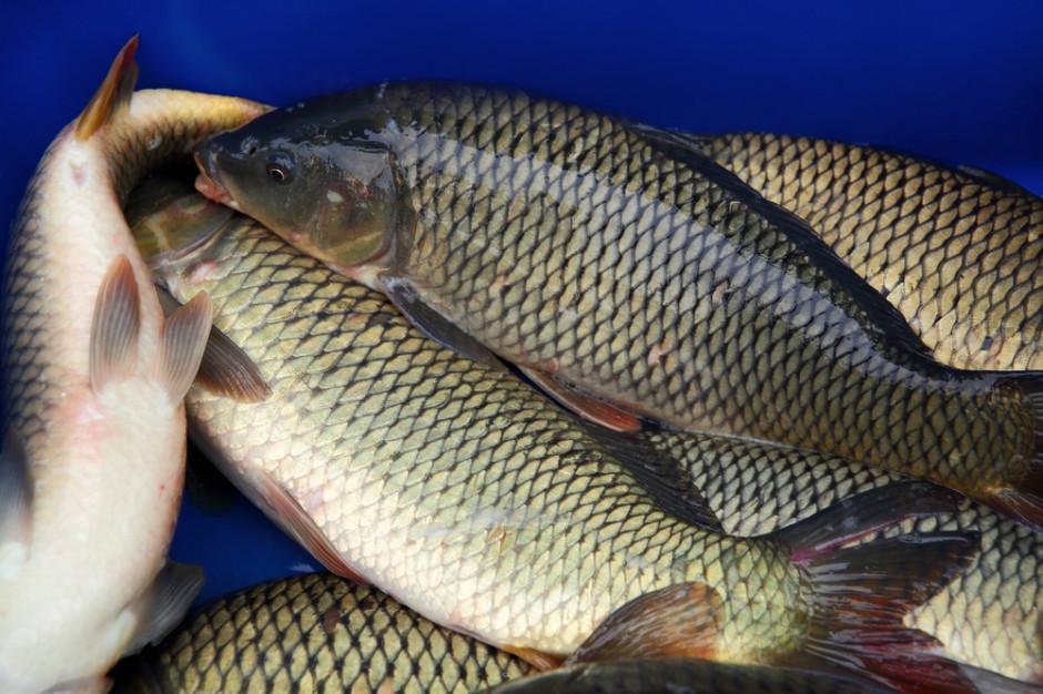 Ardanowski: Nie planujemy wprowadzenia zakazu sprzedaży żywych ryb