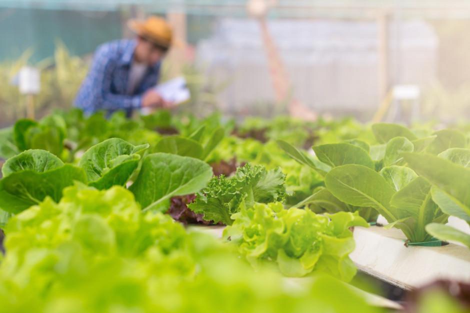 W Polsce maleje powierzchnia upraw organicznych