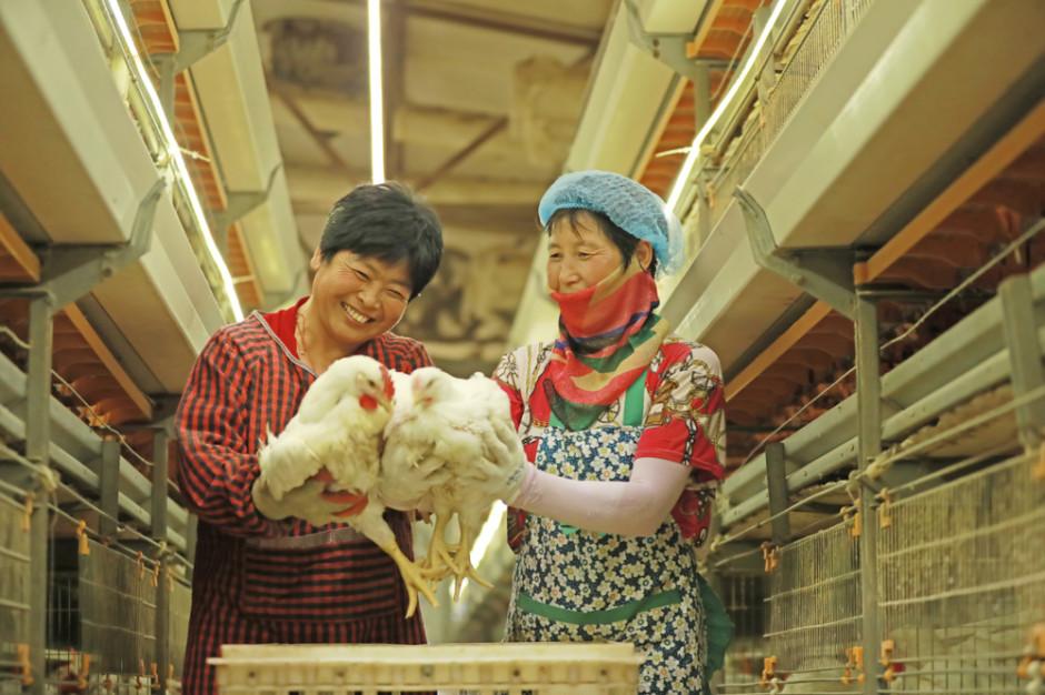 Koronawirus powoduje duże straty w chińskim drobiarstwie