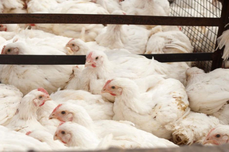 GIW: ptasia grypa nie ustępuje. Kolejne ognisko w Łódzkiem