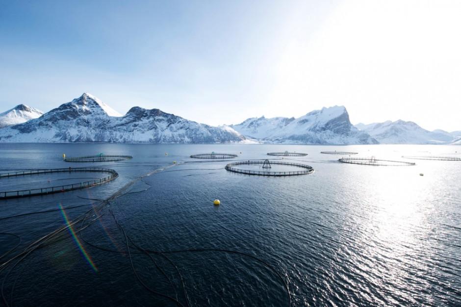 Norwegia utrzyma produkcję ryb i owoców morza  w obliczu pandemii koronawirusa