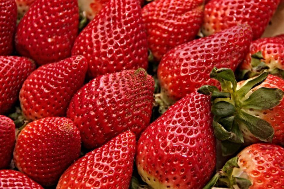 Producenci truskawek martwią się o zbiory