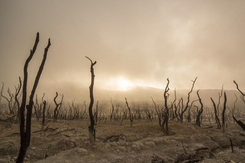 Rolnictwo walczy z suszą. Konsekwencją będą niższe plony i wyższe ceny