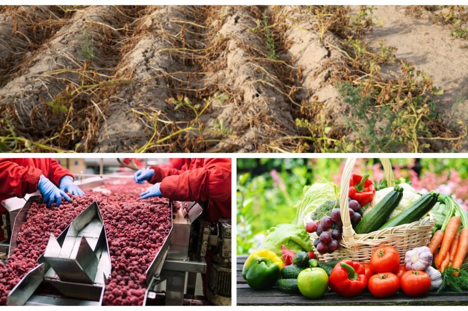 Nadchodzi ogromna susza. Uderzy w rolników i firmy spożywcze