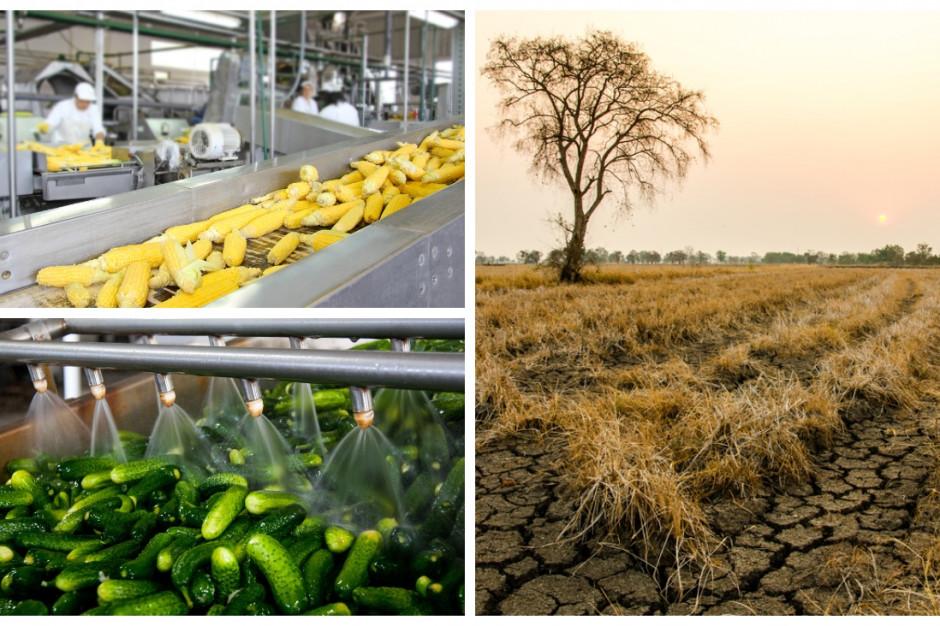 Ekonomiczny poniedziałek: Jak susza może wpłynąć na firmy spożywcze i ceny żywności?
