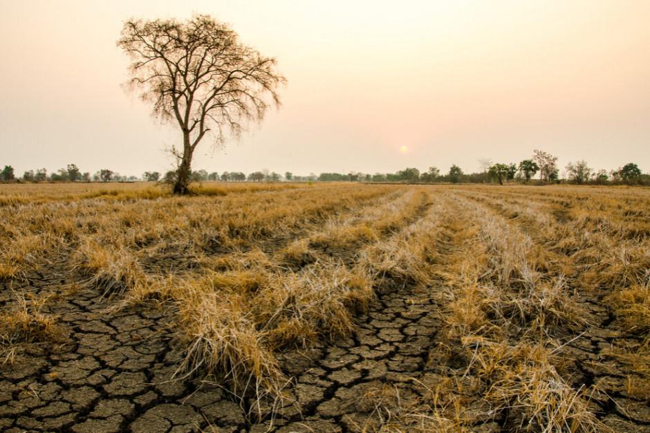 IUNG: Bez opadów. Sytuacja w rolnictwie będzie trudna