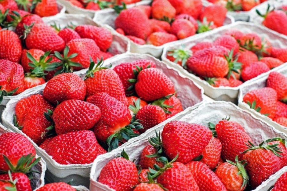 Truskawki 2020 - ile zapłacimy za pierwsze owoce?