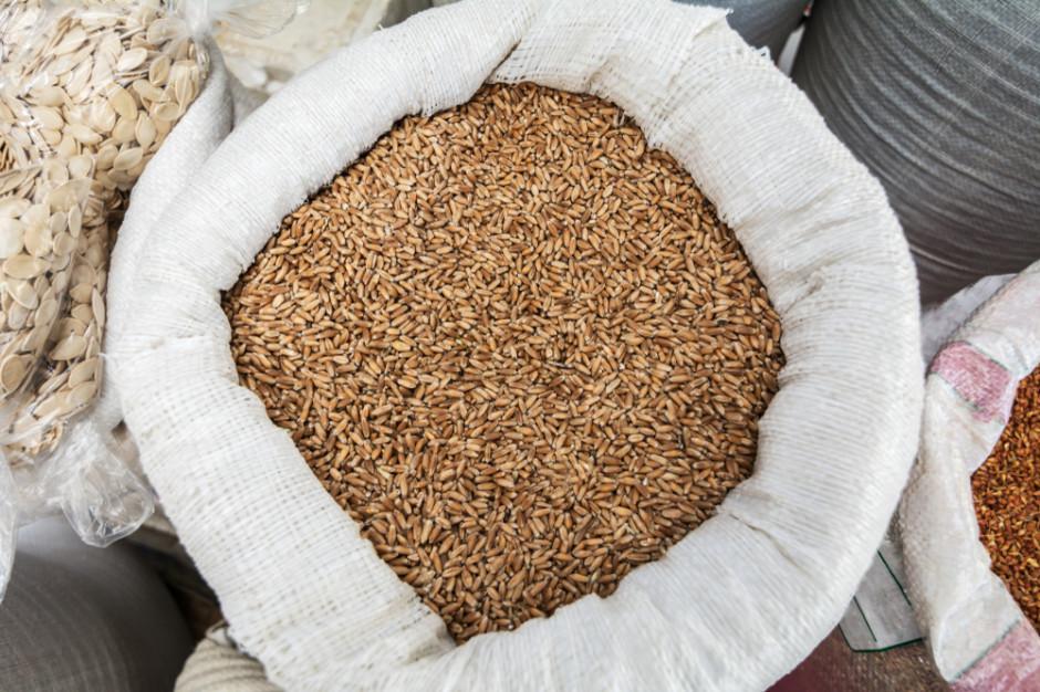 Izba Zbożowo-Paszowa: Rolnicy chętniej sprzedają ziarno, droga pszenica