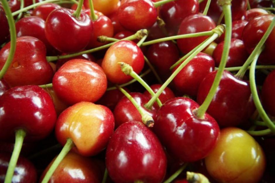 Wzrost cen owoców najwyższy. Kilogram czereśni kosztuje 70 zł?