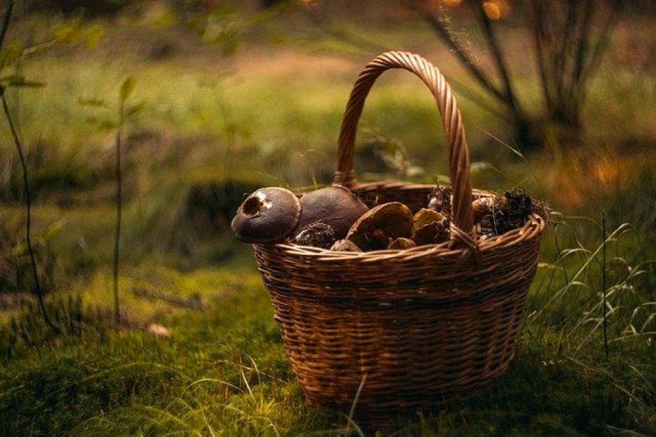 W lasach Europy zbieramy m.in. grzyby i jagody warte ok. 23,3 mld euro rocznie