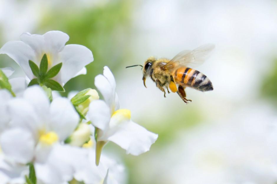 ZT Kruszwica podsumowuje 10 lat działania programu na rzecz pszczół