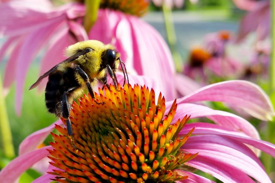 20 Maja Obchodzimy Swiatowy Dzien Pszczol To Najwazniejsze Owady Dla Czlowieka Slodycze Przekaski