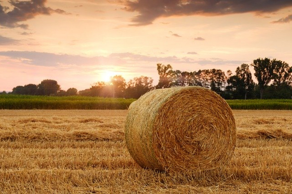 Ardanowski: ułatwiamy rolnikom zatrudnianie pracowników zagranicznych