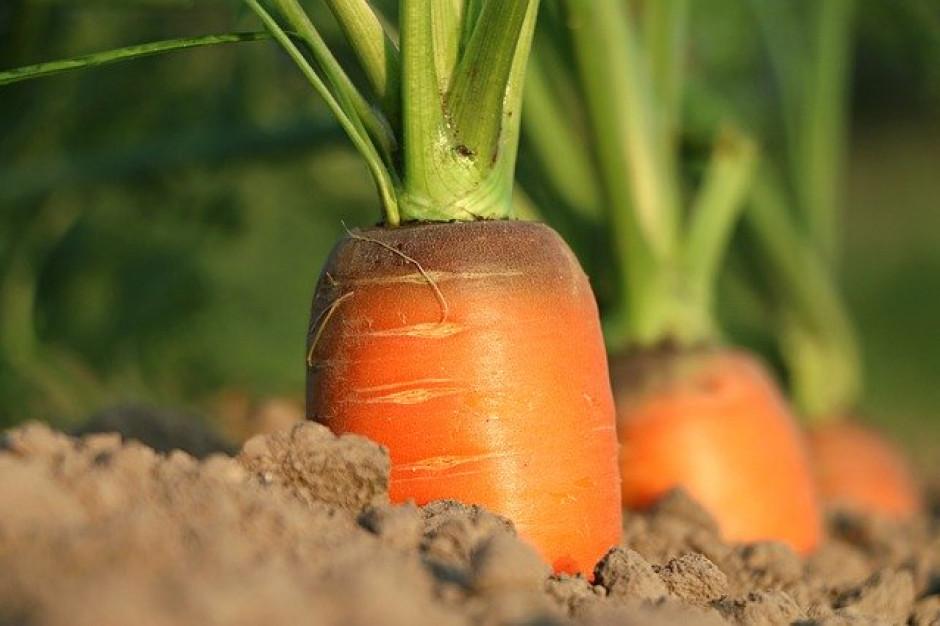 Maląg zachęca do pracy w rolnictwie, żeby zebrać wiosenne owoce i warzywa