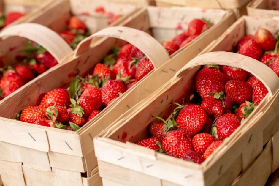 Jak obecnie kształtują się ceny truskawek na rynkach hurtowych?