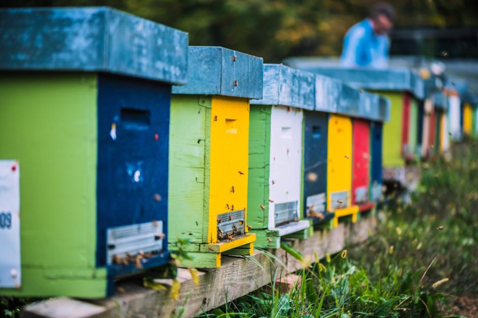 Oddychanie powietrzem z ula nowym trendem w pszczelarstwie