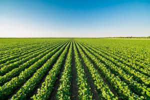 Od pola do stołu - Jak nowa unijna strategia wpłynie na branżę mięsną? (analiza)
