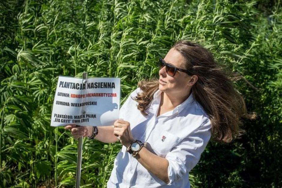 Polskie rolnictwo ma duży potencjał do uprawy konopi