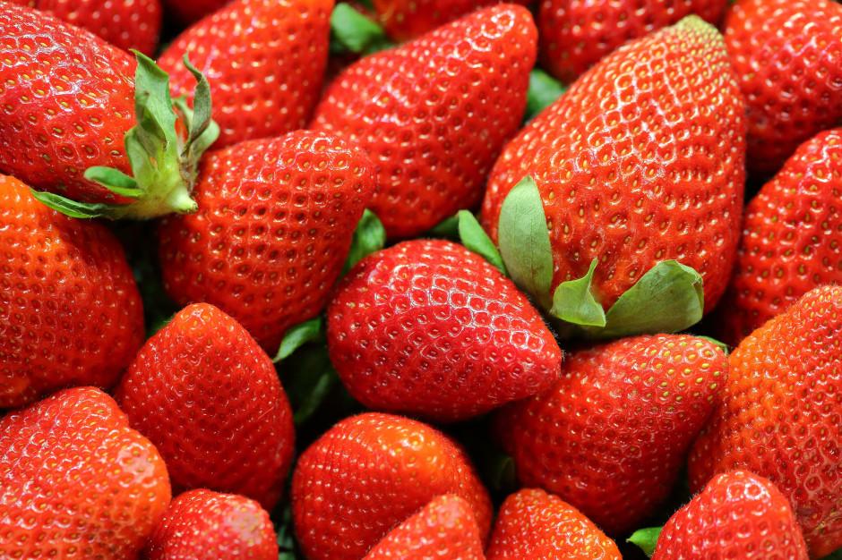 Brak zbieraczy truskawek podnosi ceny
