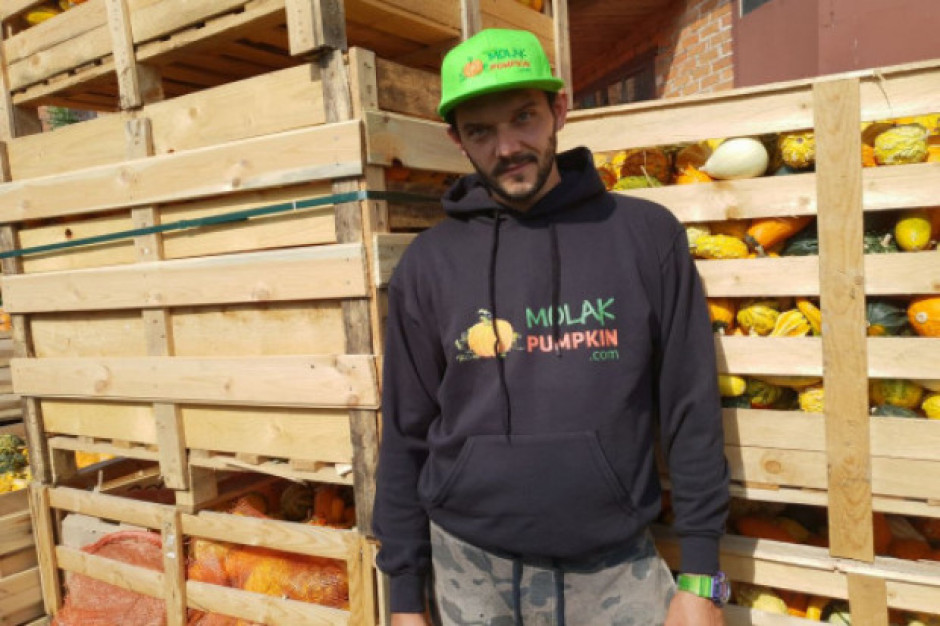 Molak Pumpkin: Zainteresowanie dynią rośnie