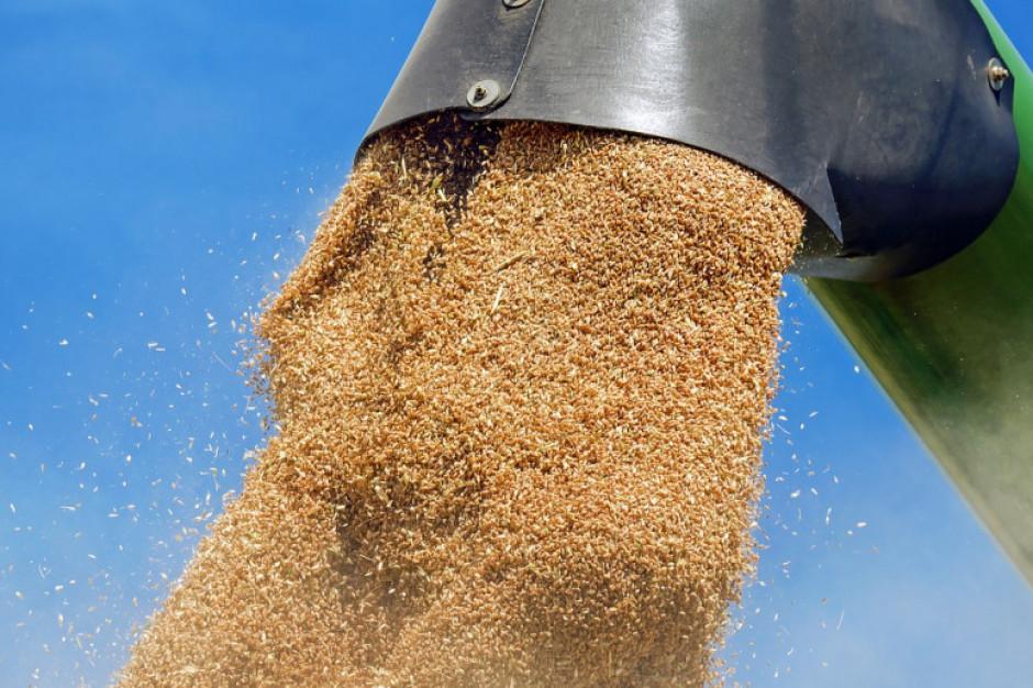 Izba Zbożowo-Paszowa: zainteresowanie eksportem pszenicy nadal duże