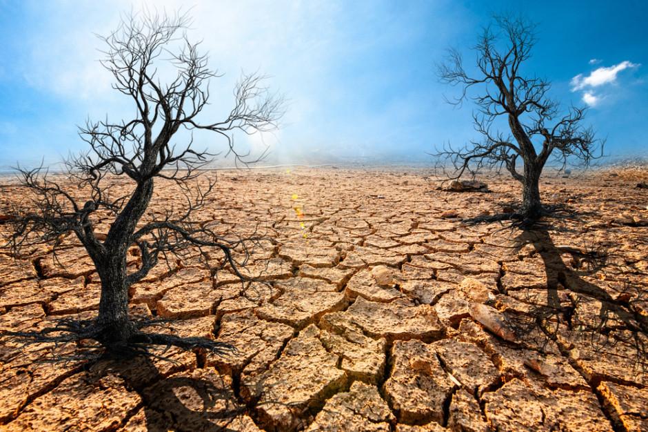 17 czerwca Światowy Dzień Walki z Pustynnieniem i Suszą